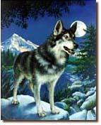 Mariah the Wolf.jpg